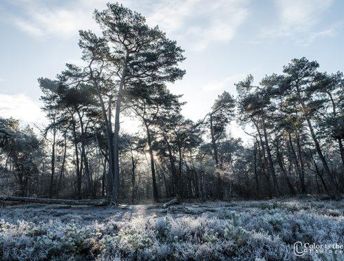 Stiphoutse bossen